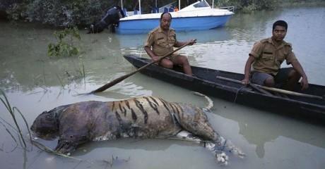 Потоп в Южной Азии: 25 фотографий, которые показывают на что способна стихия