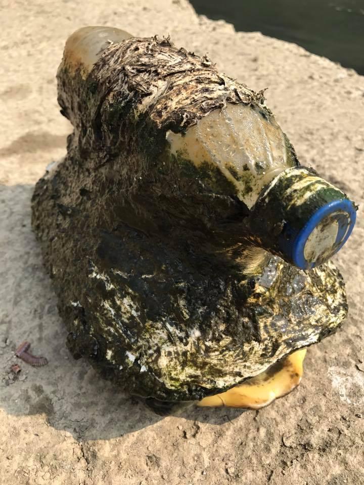 Человек заметил быстро плавающую бутылку в воде. Когда он разобрался в чем дело, то пришел в полнейший ужас