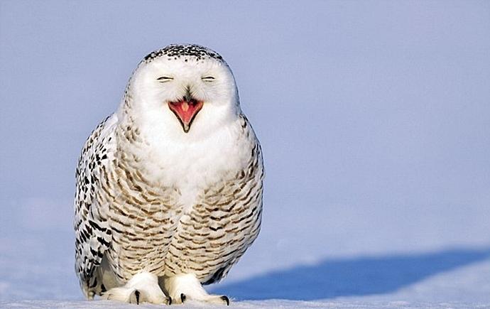 Щенок хаски подошел к полярной сове. То, что случилось после — просто невероятно!