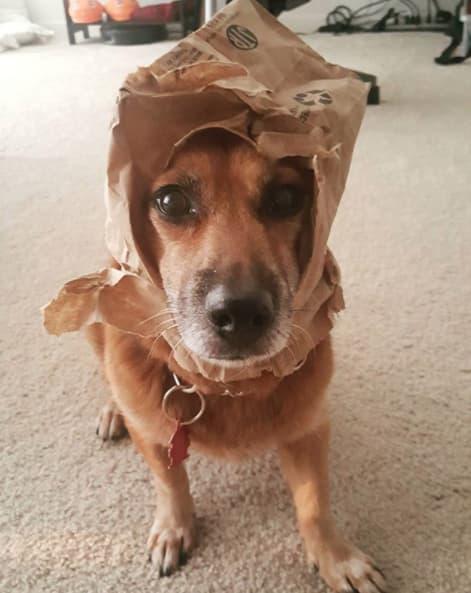 15 собак, которые всем своим видом говорят: я не причем, честно!