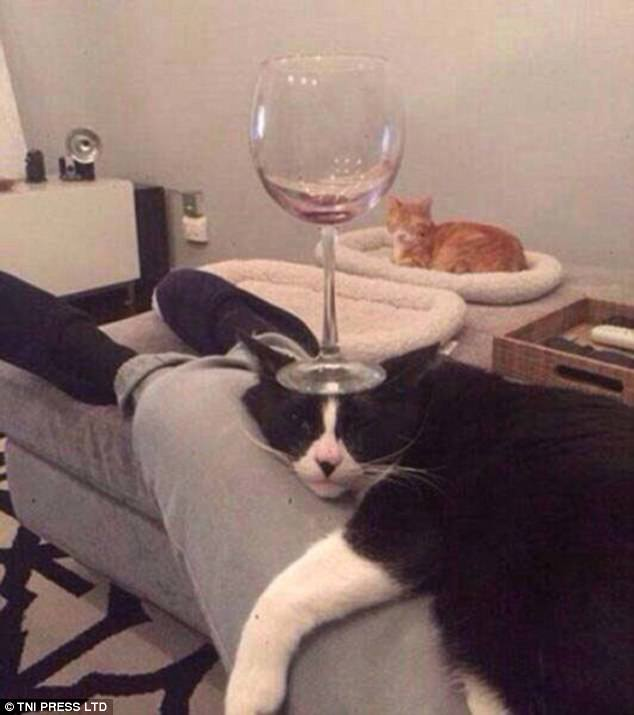 bengal cat behavior