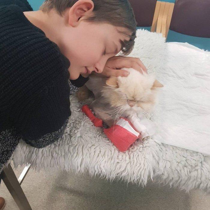 Кота сбила машина, но когда он услышал плач хозяина, то из последних сил подполз чтобы утешить его…