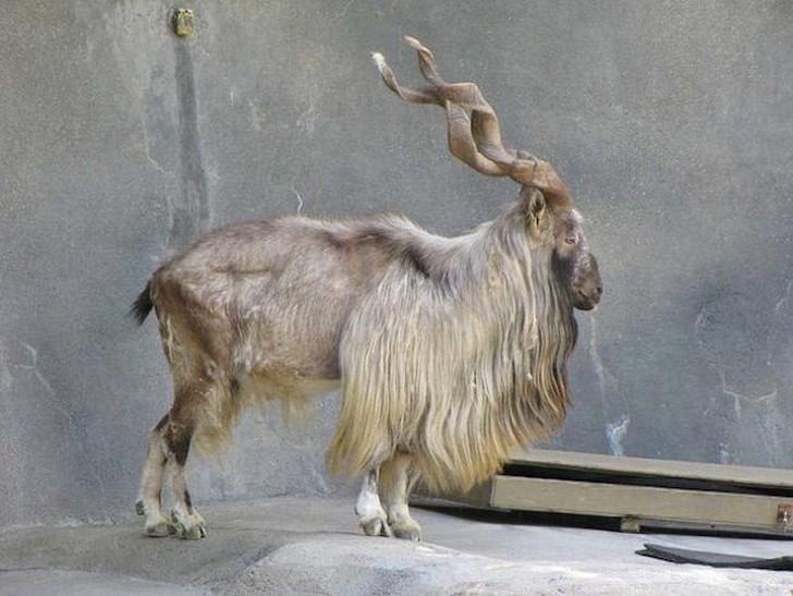 Редкие животные, которые вот-вот исчезнут с лица земли. Их нужно сохранить любой ценой! (18 фото)