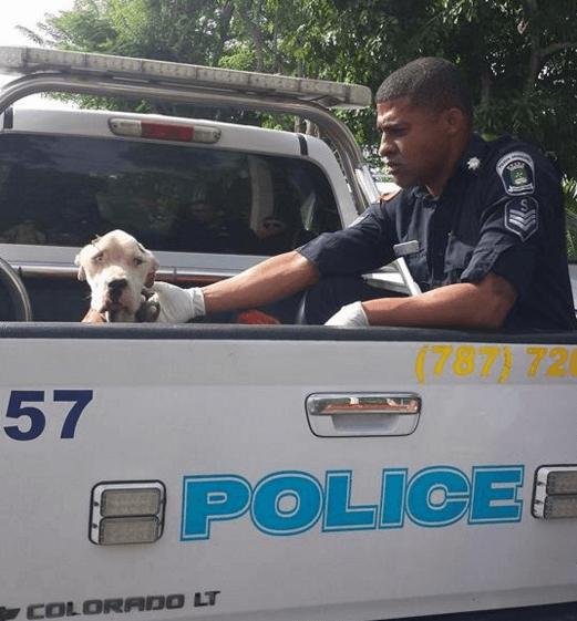 Когда его увидели соседи, то срочно позвонили в полицию! Пес умирал на глазах…