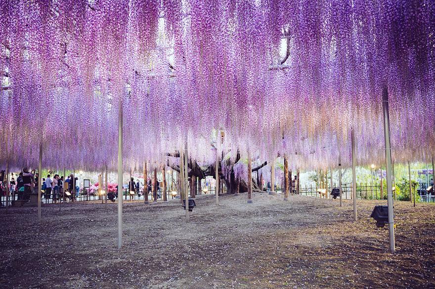 Только в Японии можно увидеть эту неописуемую красоту!