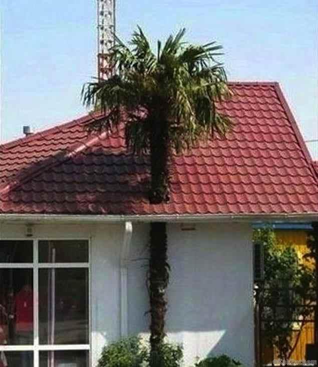 У этих архитекторов нужно отобрать дипломы!