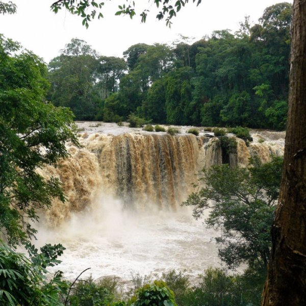 джунгли Лаоса фото