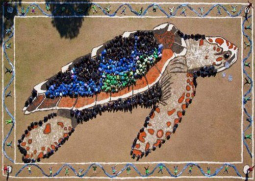 изображение на Земле Дэниела Дансера морская черепаха
