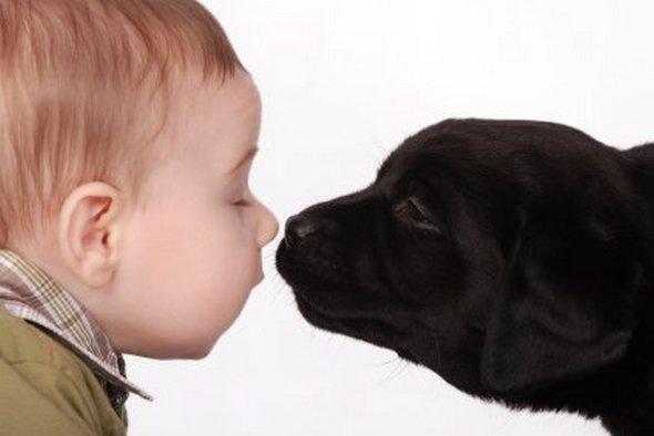 ребенок и черный пес