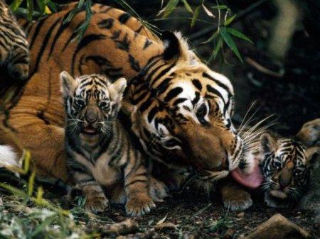 Из серии эти забавные животные (101 фото)