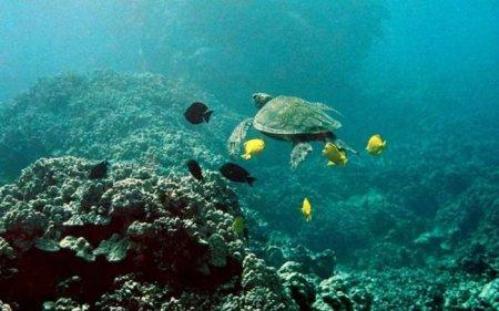 Морские обитатели (17 фото)