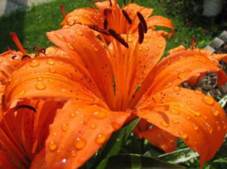 Очень красивые цветы (20 фото)