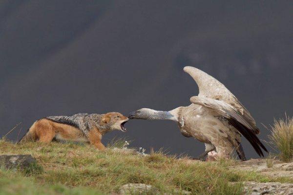 Битва за пропитание (10 фото)