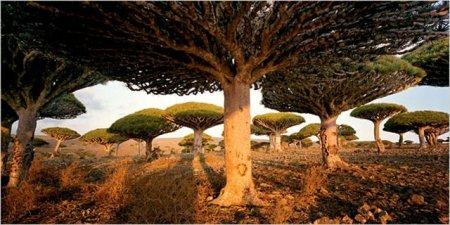 Острова Сокотра (11 фото)