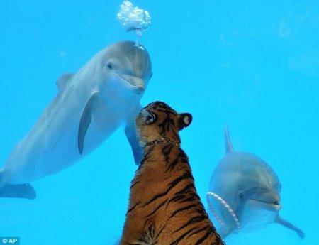 Друзья дельфины (36 фото)