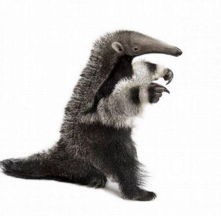 Фотографии разных животных (19 фото)