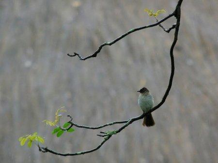 Птички под дождем (17 фото)