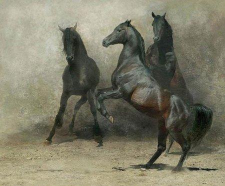 Красивые фотографии лошадей (20 фото)
