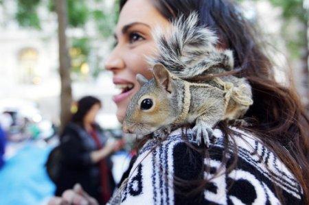 Лучшие фото животных за прошедший год (50 фото)