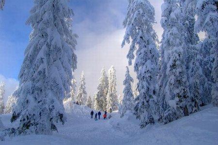 Фотографии зимы 2011 (34 фото)