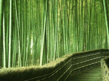 Заросли бамбука  (18фото)