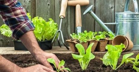 Несколько советов, как облегчить труд на приусадебном участке