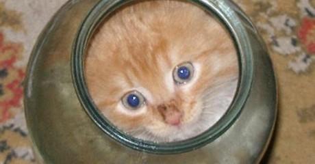 Котенок не мог вылезти из банки. Посмотри, что сделала мама-кошка… это надо видеть!