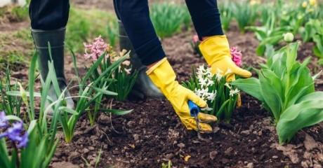 «Работы будет много»: Какие дела предстоят дачникам в саду?