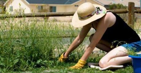 Народные методы борьбы с сорняками