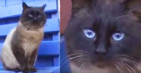 Кот верный как Хатико! Невозможно сдержать слезы!