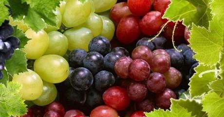 Сладкая ягода виноград: польза или вред?
