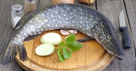 Полезна ли рыба щука для организма человека
