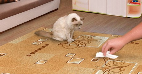 Как избавиться от запаха кошачьей мочи в доме?