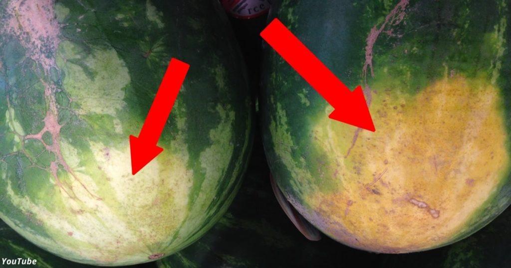 Как выбрать самый сладкий арбуз: 5 ключевых секретов