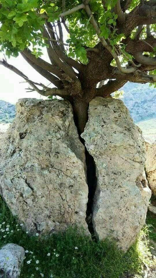 Жизнь пробьет себе дорогу. О том, какой силой обладает природа.
