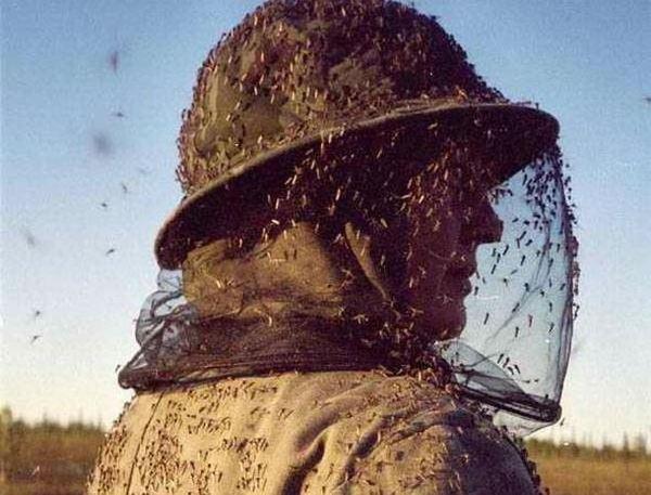 Как я боролся с комарами. Тестируем различные средства от комаров.