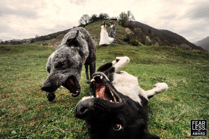 25 лучших свадебных фото со всего мира