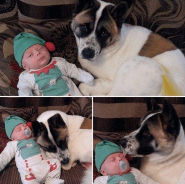 Собака странно вела себя с беременной хозяйкой. Девушка еще не знала, что она спасает ей жизнь
