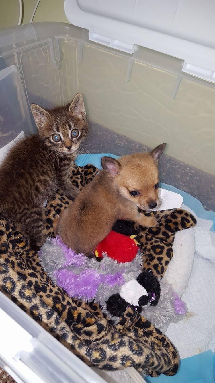 Приютские щенок и котенок спасли друг другу жизнь. От этой истории слезы наворачиваются…