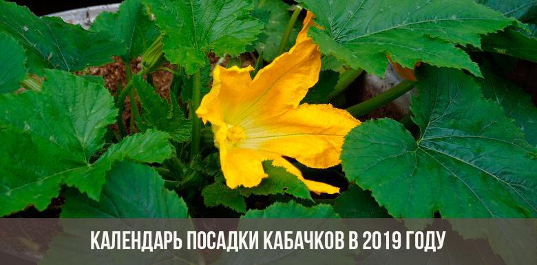 Посадка кабачков в 2019 году: календарь