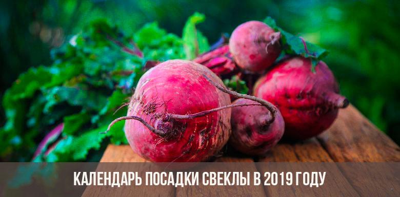 Посадка свеклы в 2019 году: календарь