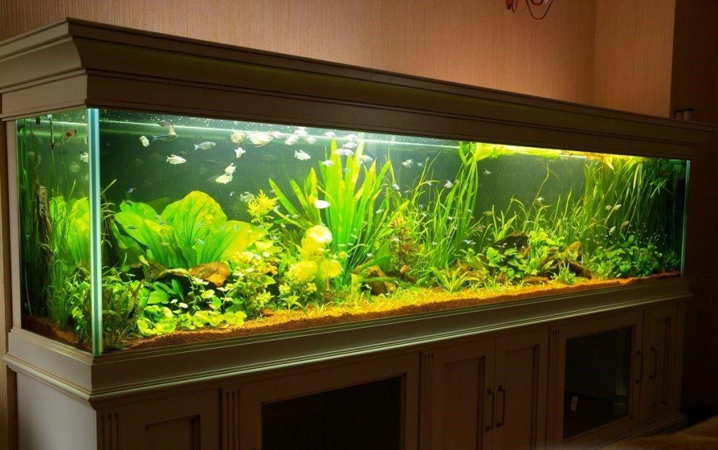 отдыхающий, большие домашние аквариумы фото жила доме, где