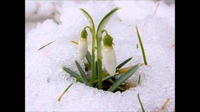 Какая погода будет весной: народные приметы