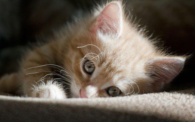 Как помочь кошке не скучать в наше отсутствие