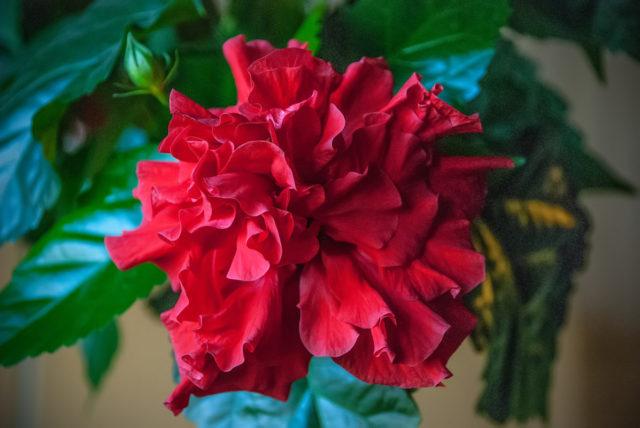 Как привлечь счастье в дом: вырастить 7 магических растений
