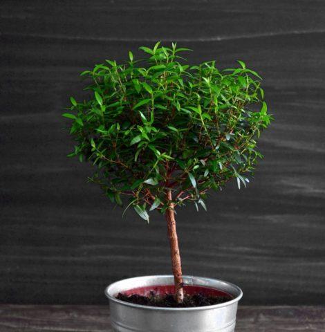 Какие комнатные растения принесут в дом счастье и любовь