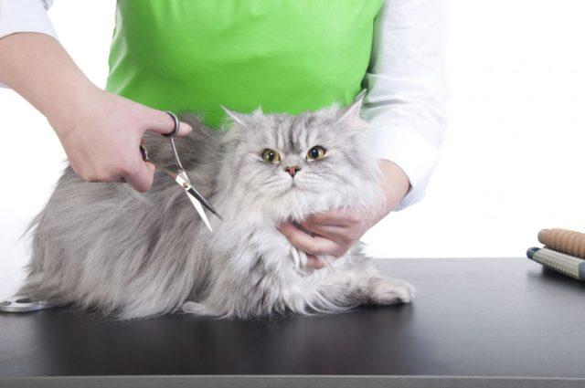 По каким причинам нельзя стричь кошек