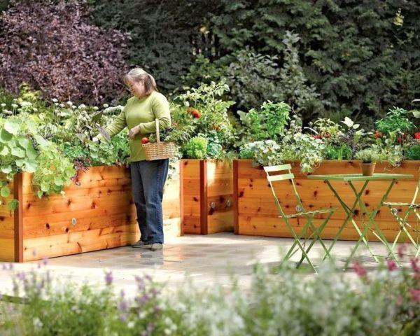 Как придать огороду эстетичный вид. Красивые грядки
