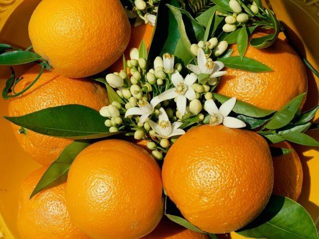 Насколько важен апельсин для здоровья человека
