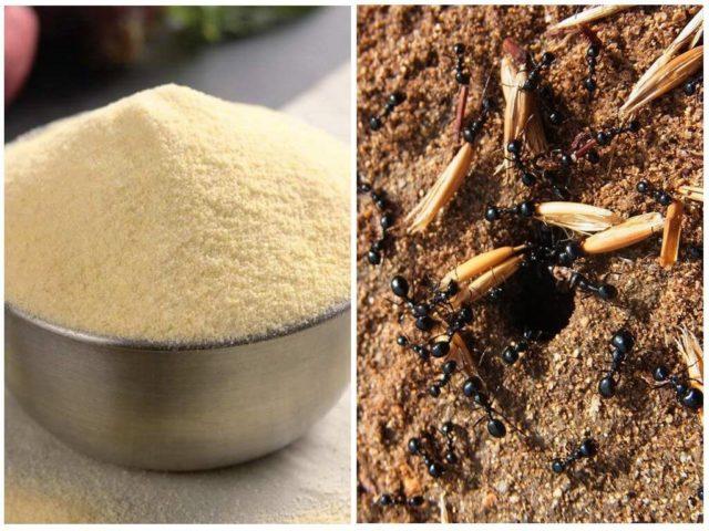 Самый простой, безопасный и действенный метод борьбы с муравьями